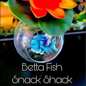Betta fish feeding house. No more messy tanks.